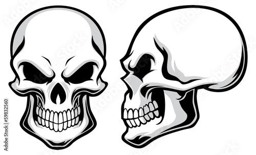 Photo cartoon skulls