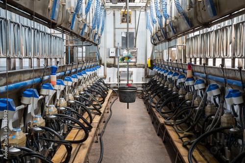 Fototapeta  Equpment with milking machines on dairy farm