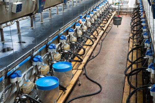Fotografie, Obraz  Rows with milking machines on dairy farm