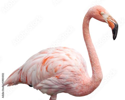 Garden Poster Flamingo flamingo portrait