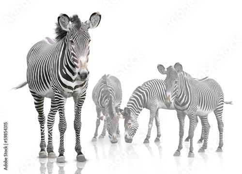 Photo Stands Zebra four zebra