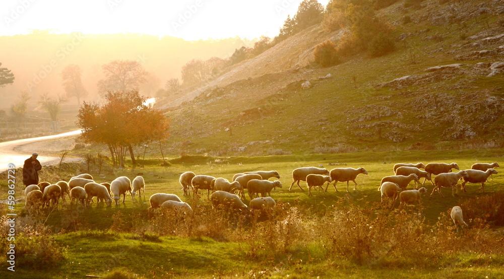 Photo & Art Print Shepherd herding sheep at sunrise