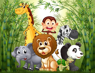 Fototapeta A bamboo forest with many animals