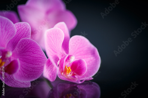 beautiful  Phalaenopsis
