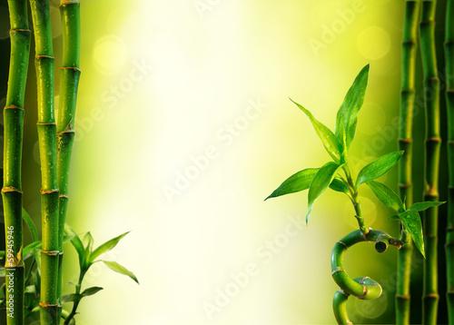 tlo-z-bambusem-do-leczenia-uzdrowiskowego-oliwkowa-zielen