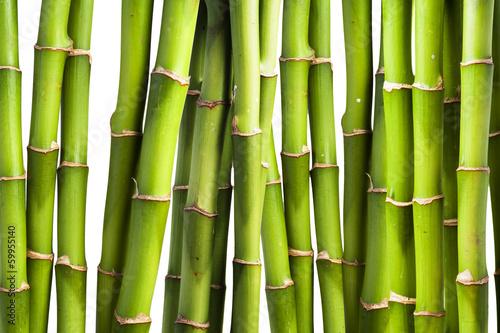 swiezy-bambus
