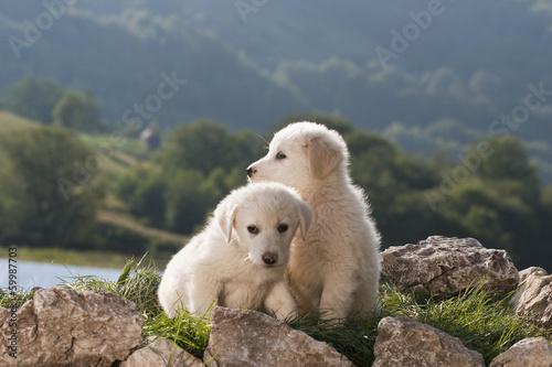 Acrylic Prints Polar bear dog