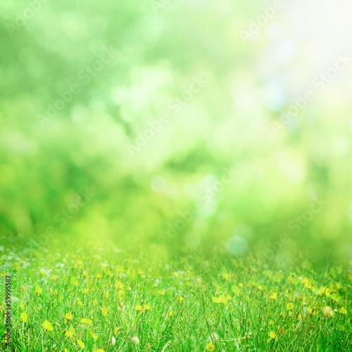 Garden Poster Spring Sunny spring meadow