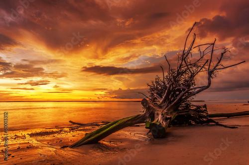 Foto op Plexiglas Landschappen Dead tree trunk on tropical beach