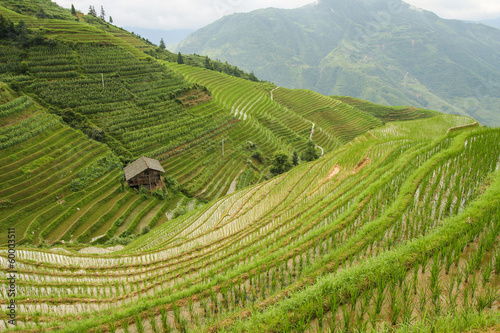 Idyllic view over rice fields in longshen china Canvas Print