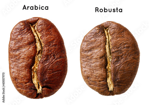 Black arabica, robusta coffee bean isolated on white background. Canvas Print