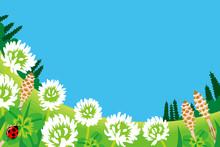 Spring Meadow, Wildflowers
