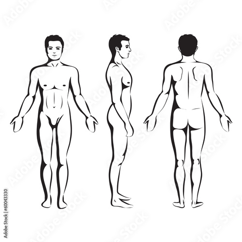 man body anatomy, human front, back and side - Buy this stock vector ...