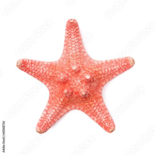 Sea star on white background