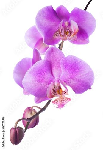 kwitnaca-orchidea-na-bialym-tle
