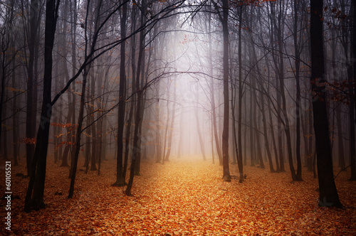 Poster Chocolate brown Foggy forest