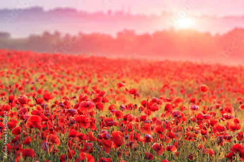 Poster Village red poppy field in morning mist