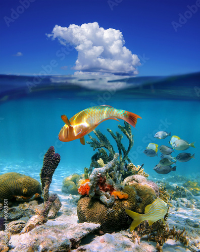 Waterline with cloud and marine life in the sea