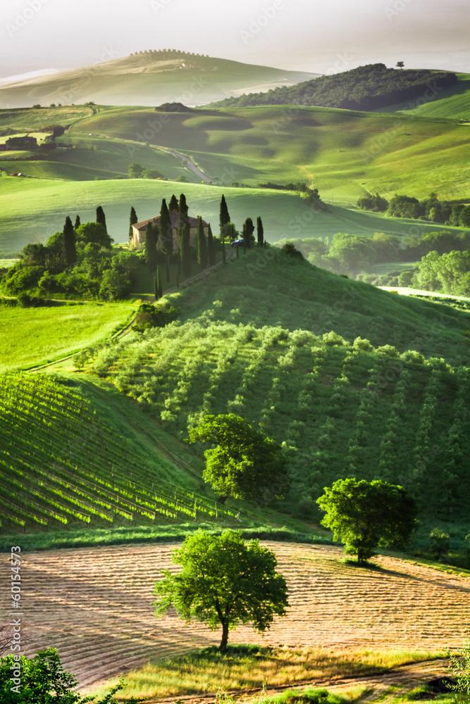Fototapety, obrazy: Gospodarstwo gajów oliwnych i winnic, Toskania