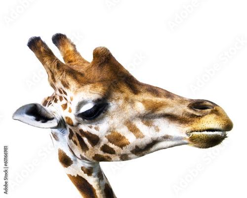 Photo  Giraffe isolated