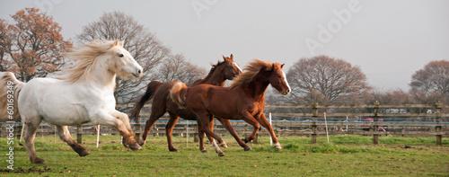 Stampa su Tela Horses running past
