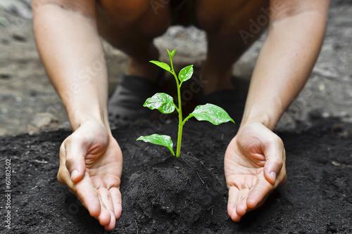 Spoed Foto op Canvas Planten farmer's hands growing a young tree