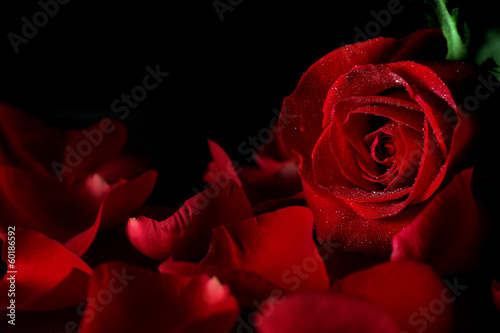 Photo  Red rose