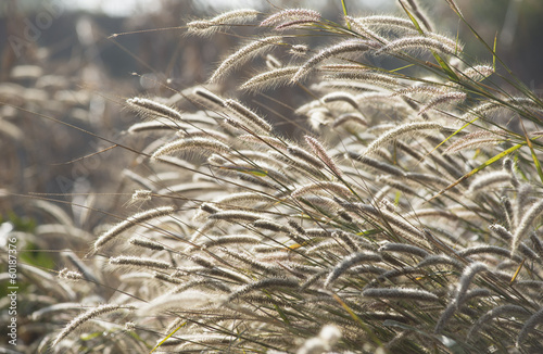 obwod-lekki-piekny-kwiat-trawy-ostrza