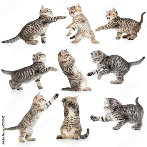 tabby kittens isolated collection Wallpaper Mural