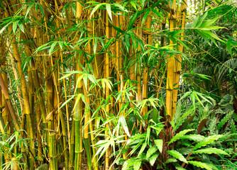 Fototapeta Bambus Bamboo background