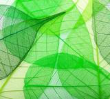 Macro green leaves background