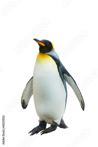 Papiers peints Pingouin Emperor penguins. isolated on white background