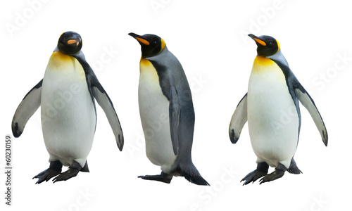 Photo sur Toile Pingouin Three imperial penguins on a white background