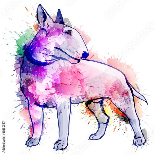 Foto Bull terrier grunge illustration
