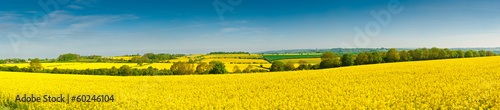 Poster de jardin Orange Oilseed Rape, Canola, Biodiesel Crop