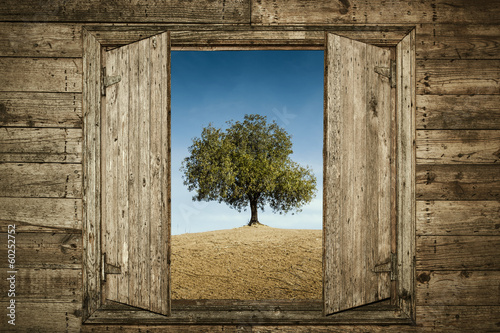 The Tree Behind the Window Poster