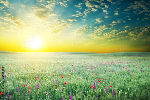 Deurstickers Weide, Moeras Spring meadow of violet flower.