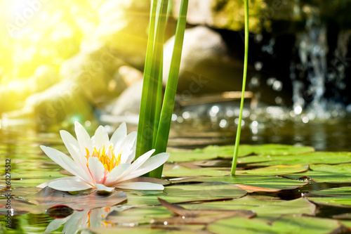 Photo Stands Water lilies lotus flower