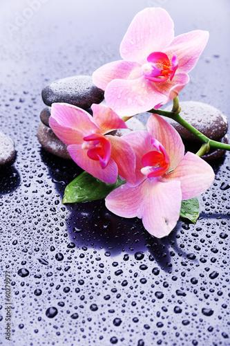 kompozycja-z-piekna-kwitnaca-orchidea-z-kroplami-wody-i