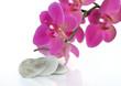 cœur en pierre et orchidée