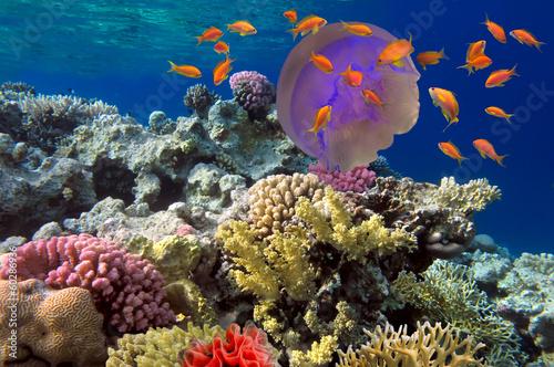 Valokuva  Big jelly-fishes