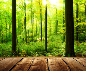 FototapetaFresh green forest with sunbeams and wooden floor