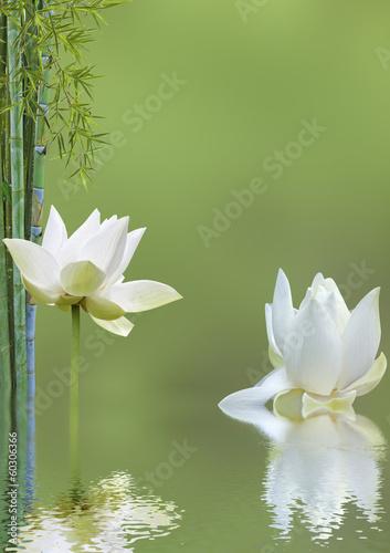 Poster Waterlelies décor relaxant asiatique