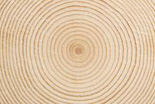 Texture Circolare Di Legno