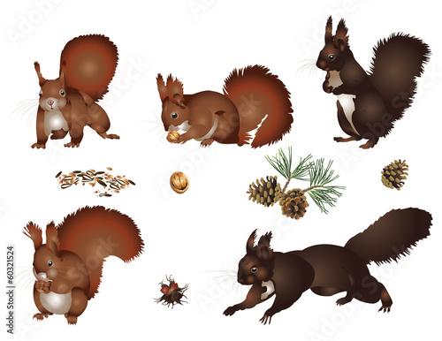 La pose en embrasure Squirrel Squirrels