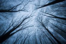 Dark Scene With Tree Tops Ending In Fog