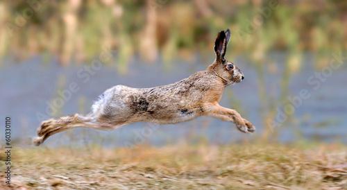 Cuadros en Lienzo Hare