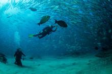 Divers And Trevally Baitball, Cabo Pulmo, Mexico.