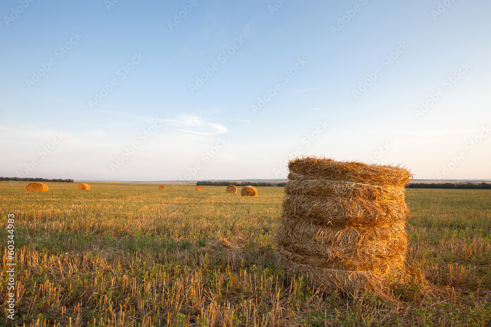 Fotografie, Tablou  haystacks on field