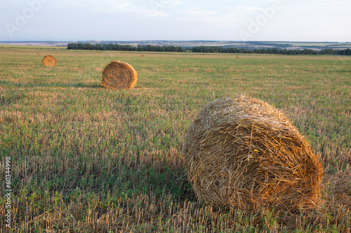 Fotografie, Tablou  haystacks field